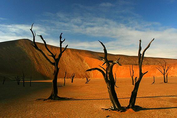 Deadvlei trees